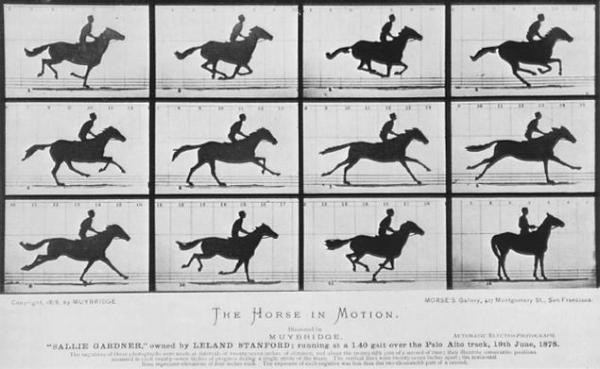 muybridge_galloping_horse
